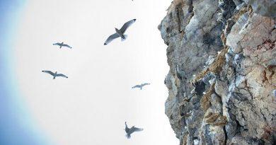 Birds nest in a fjord in Norway's Arctic. (Martin Bureau)