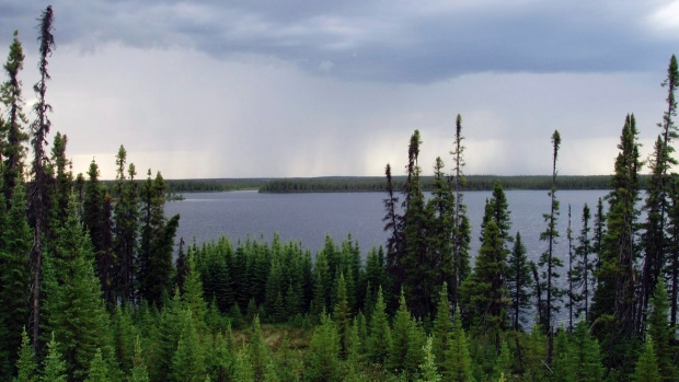 A total of 708,000 square kilometres of boreal forest is now protected by government. Another 460,000 square kilometres are being harvested through sustainable practices (Matt Medler/Associated Press)
