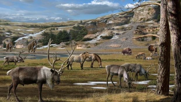 Huge mammals including mammoth, horse, reindeer, bison and musk ox roamed the Arctic during the Ice Age. (Mauricio Anton)