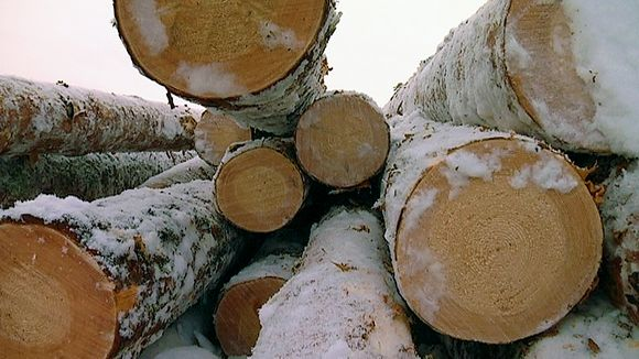 UPM's strategy of selling forests to international invstors is attracting German buyers -- who havea tradition of investing in forestry. (Tommi Parkkinen / Yle)