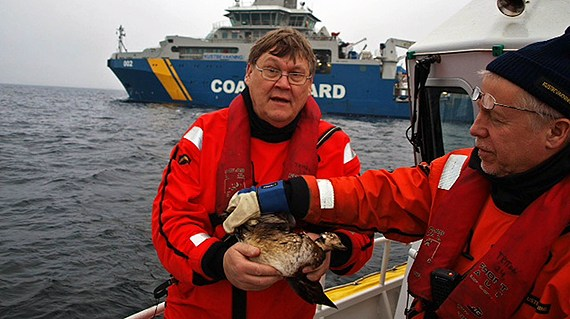 A member of the Swedish Coast Guard holds one of the oil-covered birds. (Dennis Rase/ Kustbevakningen - Swedish Coast Guard)