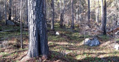 A Swedish nature reserve. (Örjan Holmberg/Swedish Radio)
