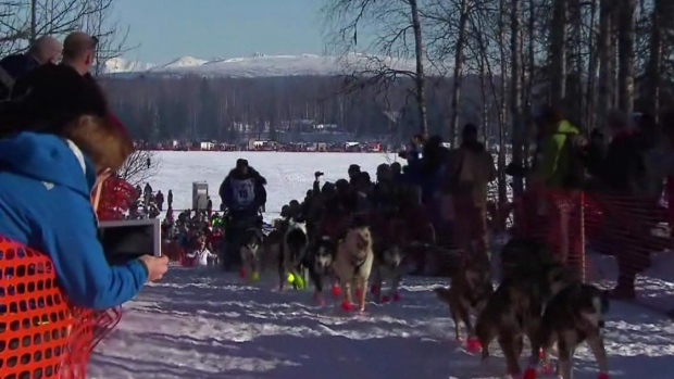 Almost 70 dogteams started in this year's Iditarod compared to 18 in the Yukon Quest. (CBC)