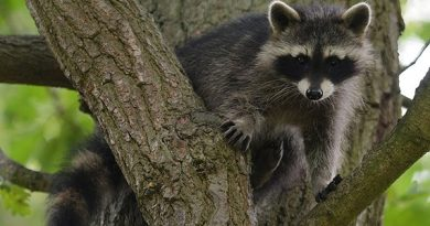 More masked bandits on the way? (AFP)