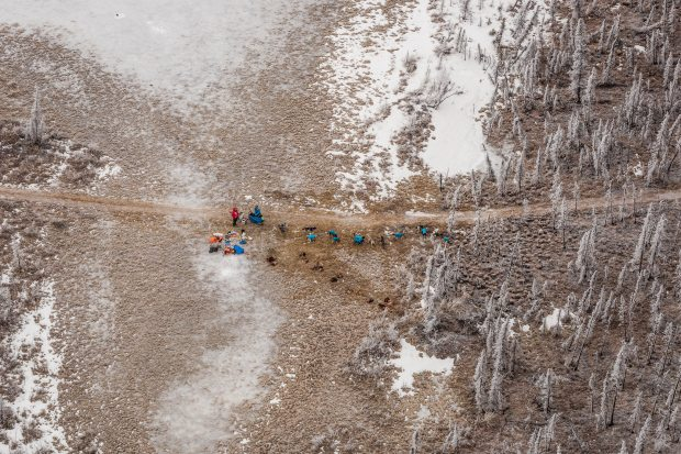 Musher Jake Berkowitz, in red, stopped in the Farewell Burn between Rohn and Nikolai during this year's Iditarod. March 4, 2014. (Loren Holmes / Alaska Dispatch)