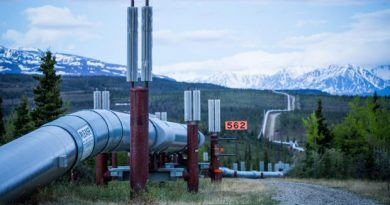 The Trans-Alaska Pipeline, seen here near Delta Junction. The 800-mile oil pipeline is a critical part of the state's oil production infrastructure. June 7, 2013. (Loren Holmes / Alaska Dispatch)