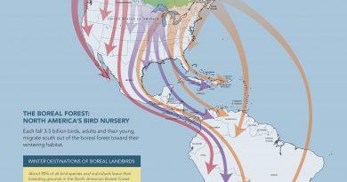 A map showing boreal bird migration. (Courtesy Boreal Songbird Initiative)