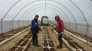 Ukrainian workers in a greenhouse. (Kaija Kervinen / Yle )