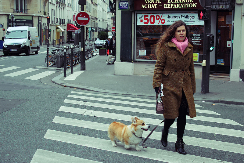 People in Paris walk with their dogs to get around, and it's no surprise. So do people in the Arctic. ( Mia Bennett / 2012)