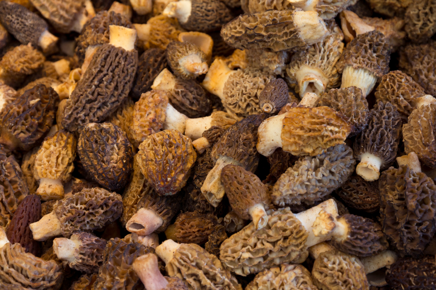 A closeup of fresh morel mushrooms. (iStock)