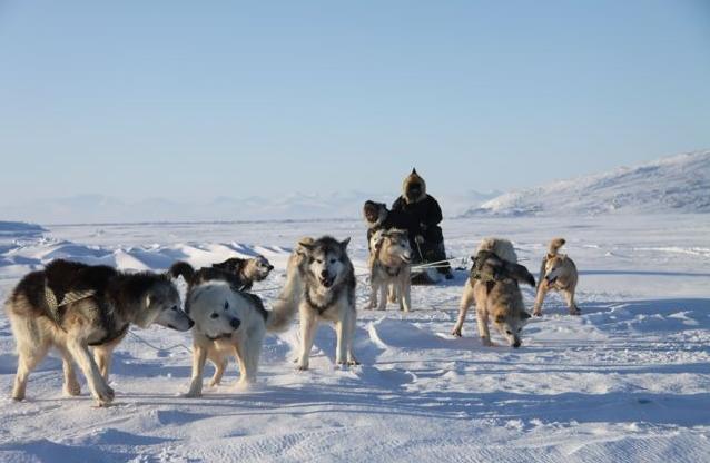 A dog team and Inuit hunter on Baffin Island in Canada's  eastern Arctic territory of Nunavut. (Levon Sevunts / Radio Canada International)