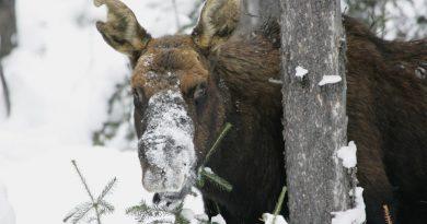 Photo: National Park Service. Alaska Dispatch.
