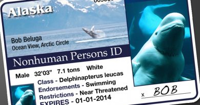 Whales and dolphins deserve legal rights as