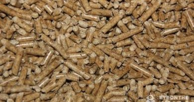 Could biomass options like these wood pellets be the answer to the North's energy woes? One of your most read Eye on the Arctic stories explored this issue this week. (Eilís Quinn/Eye on the Arctic)