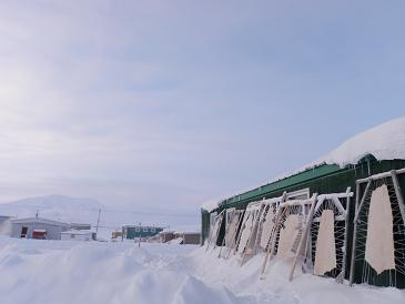Skins being stretched outside of a building in Qikiqtarjuaq, Nunavut. (Eilís Quinn/Eye on the Arctic)