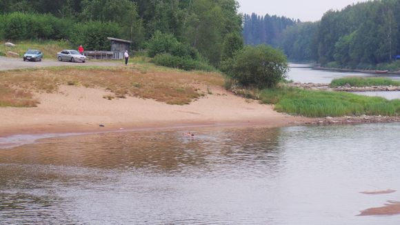 Swimming off the shore of the Kokemäki river may not be safe, depending on who you ask. ( Matti Kauvo / Yle )