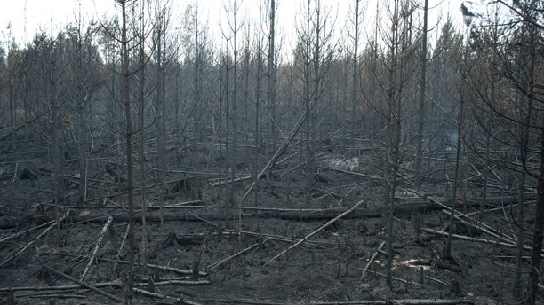 Some of the flames have abated. ( Petra Levinson/Sveriges Radio)