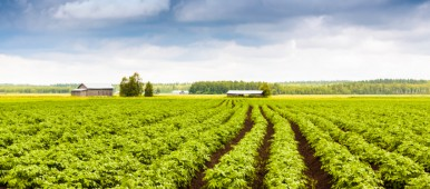 A potato farm in Finland. What does the future hold for the nation's farming industry? (iStock)