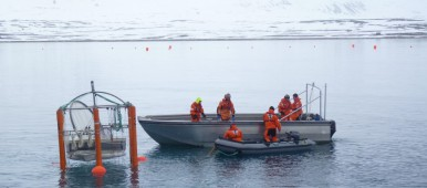 "Scientists set up a ""mesocosm"" to measure ocean acidification Spitzbergen 2010. (Irene Quaile)"