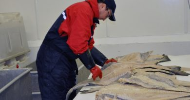 Export of clipfish increased 47 percent in October and is one of the reasons for the monthly alltime high. (Trude Pettersen/Barents Observer)