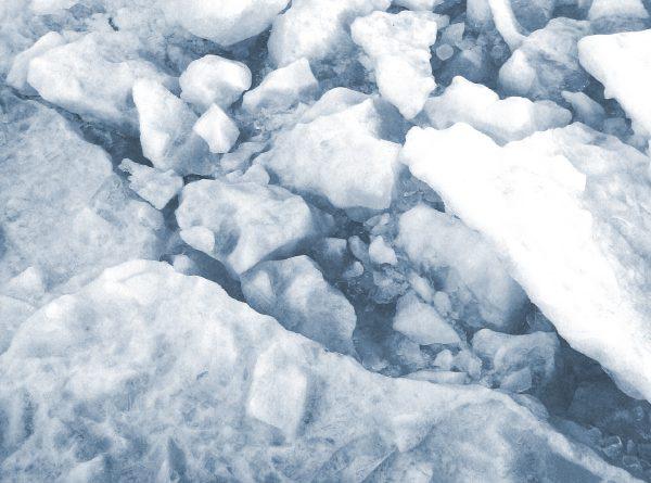 Saimaa ringed seals make dens in freshwater lakes. (iStock)