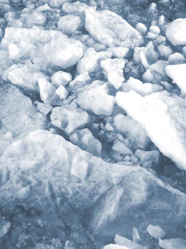 Saimaa ringed seals make dens on frozen freshwater lakes. (iStock)