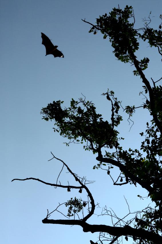 Bat on the sky