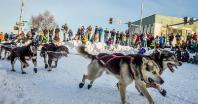 Michael Williams, Jr's team rounds the corner at Cordova Street during the ceremonial start of Iditarod 2014 in Anchorage. (Loren Holmes/Alaska Dispatch)