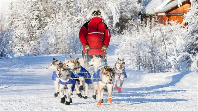 Dawson City musher Brian Wilmshurst is one of this year's mushers in the Yukon Quest sled dog race. Organizers say open water may force some route changes.  (Julien Schroder/Yukon Quest)