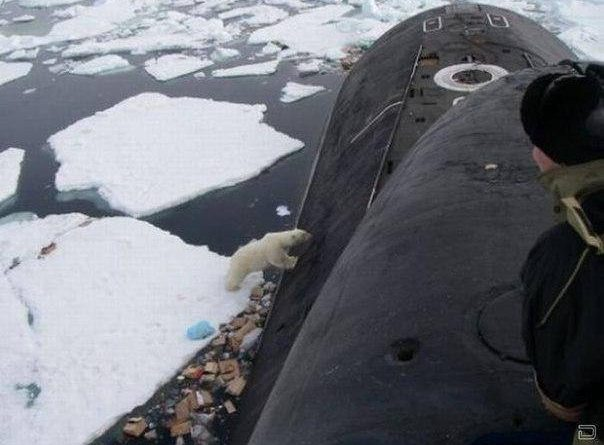 This bag with plastic waste and food garbage from the submarine is not the polar bear's traditional dinner. (Location Unkown/ Provided by Blogger51 courtesy of Barents Observer)