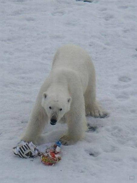 This bag with plastic waste and food garbage from the submarine is not the polar bear's traditional dinner. (Location unkown/ Provided by Bloger51, courtesy of Barents Observer)
