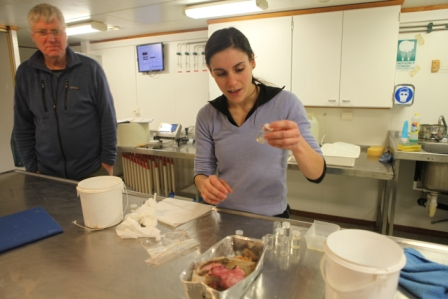 Marine looking at the stomach of a tiny fish. Stig looks on. (Irene Quaile)