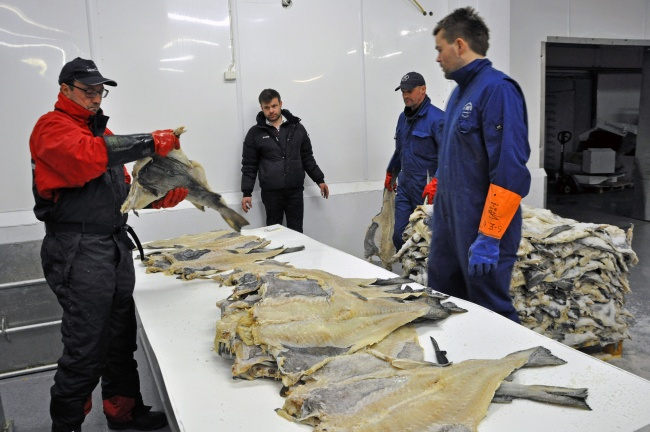 Inspection of clipfish for export. Cod is one of the commercially most important species of fish in the Atlantic ocean. (Trude Pettersen/Barents Observer)