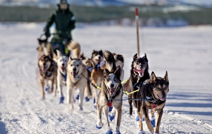 Dog musher Marit Beate Kasin. (Jonas Karlsbakk /BarentsObserver)