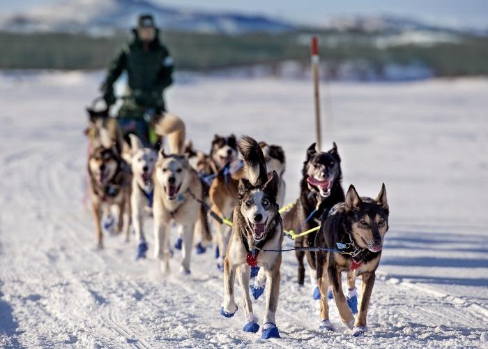 Dog musher Marit Beate Kasin. (Jonas Karlsbakk /BarentsObserver)