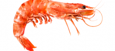 How will this shrimp's space journey help people to travel to Mars? (iStock)