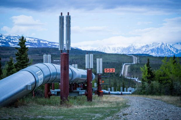 Oil flow in the trans-Alaska Pipeline -- shown here near Delta Junction in a June 2014 file photo -- slowed by about 200,000 barrels in early May, in response to a storage crunch in Valdez. (Loren Holmes/Alaska Dispatch News)