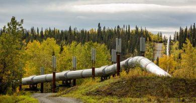 The Trans-Alaska Pipeline, seen near Copper Center on Tuesday, Sept. 9, 2014. (Loren Holmes / Alaska Dispatch News)