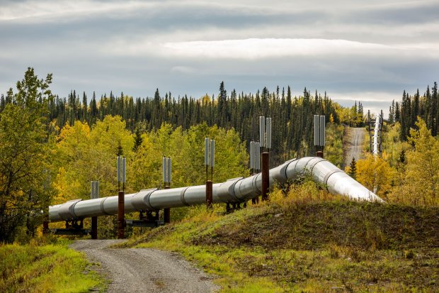 The Trans-Alaska Pipeline, seen near Copper Center on Tuesday, Sept. 9, 2014. (Loren Holmes / Alaska Dispatch News)