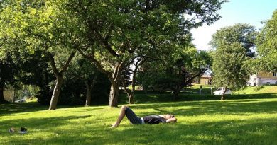 Bio-diverse meadows would need less fertilizer and maintenance than lawns say some researchers. (Cajsa Vingros Carlson/Sveriges Radio)
