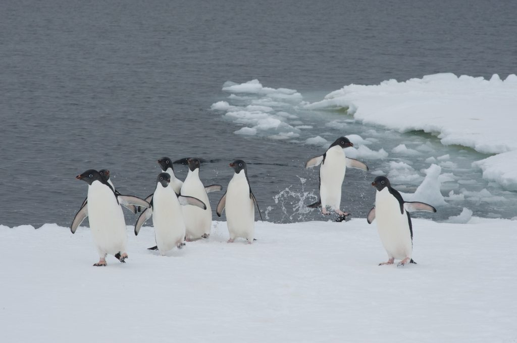 Even the Antarctic is not safe from warming (Pic thanks to International Polar Foundation)