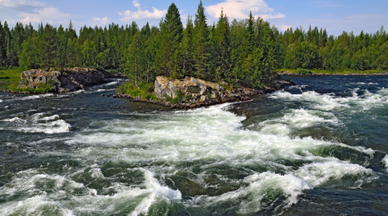 The Umba River (pictured above) on the Kola Peninsula in Russia. An outbreak of the fungal infection Saprolegnia has affected salmon in several of the region's rivers. (iStock)