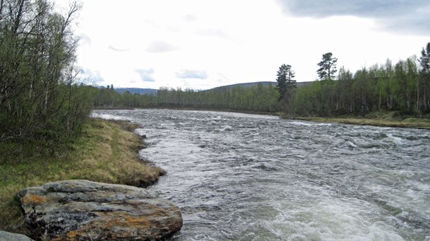 Rapids along the Vindel River. (Örjan Holmberg / Swedish Radio)