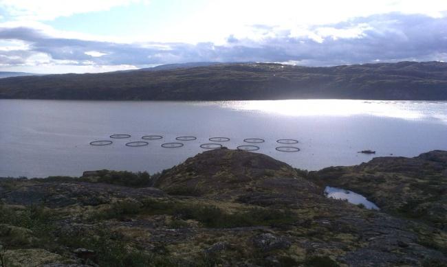 Aquaculture farms in the Kola Peninsula experience massive fish death (Photo: Bloger51.com)