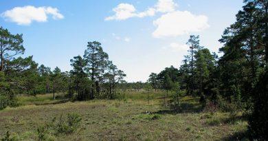 The Ojnare forest on northern Gotland. (Jonas Neuman/Sveriges Radio)