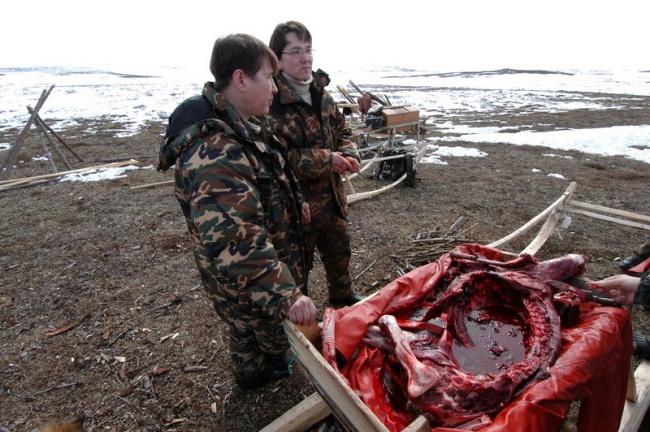 Former leader of Yasavey Aleksandr Belugin (left) and the new leader Vladislav Peskov together on the Nenets tundra. (Thomas Nilsen/Barents Observer)