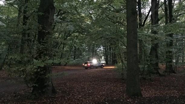 Police on the hunt for wild boar in a central park in Malmö. (Anton Kalm/Sveriges Radio)