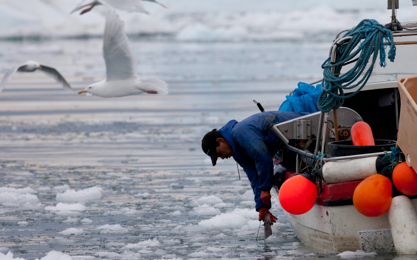 An Inuit fisherman pulling a fish out of icy sea waters in Ilulissat, Greenland in 2011. (Brennan Linsley/AP)