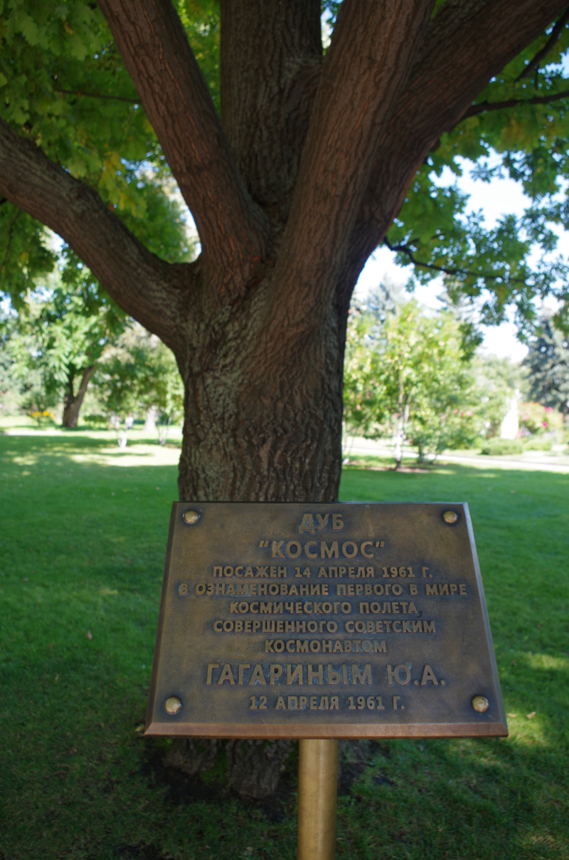 """A tree named """"Cosmos,"""" planted on April 14, 1961 – the day Gagarin became the first human (and first Soviet) in space. (Mia Bennett)"""