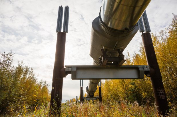 The Trans-Alaska Pipeline along the Elliot Highway north of Fairbanks on September 8, 2015. (Loren Holmes / Alaska Dispatch News)